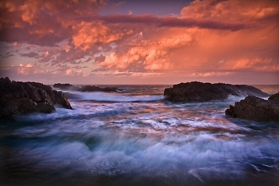 Forster Morning  by Joel  Haldane