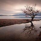Loch Lomond... Stream-line by David Mould