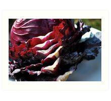 Study in cabbage I  Art Print