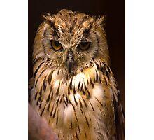 Owl #2 Photographic Print