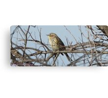 Bird on a branch. Canvas Print