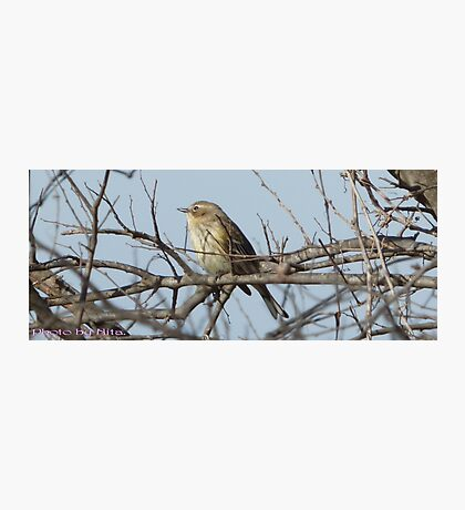 Bird on a branch. Photographic Print