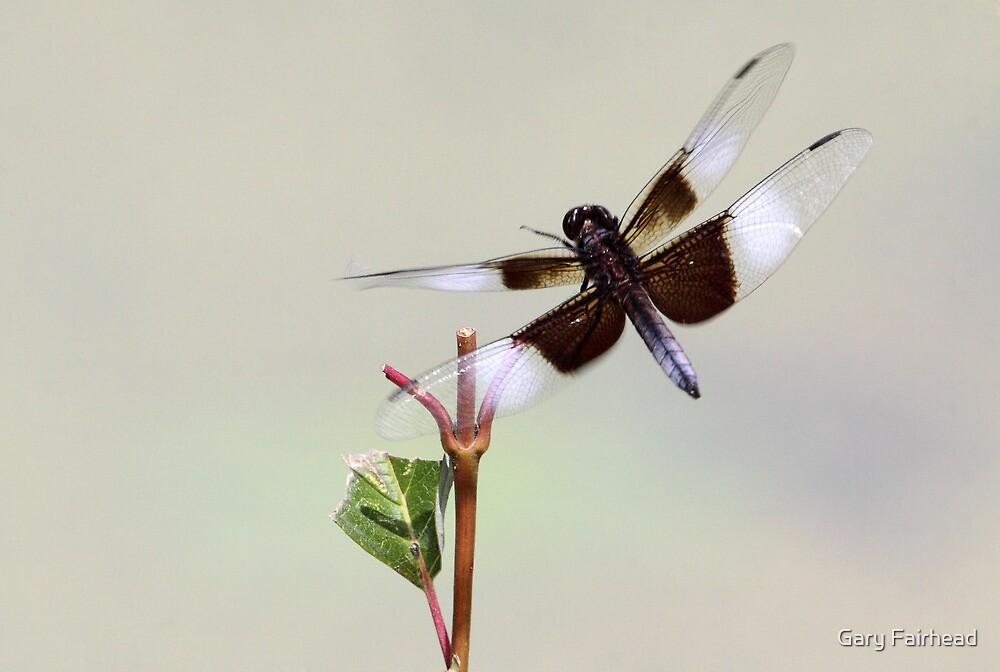 Fly Dragon Fly ! by Gary Fairhead