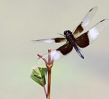 Fly Dragon Fly ! by Gary Fairhead
