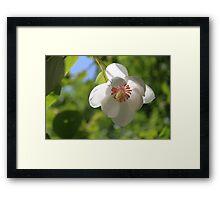 When a Magnolia flowers - JUSTART © Framed Print