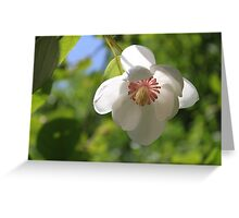 When a Magnolia flowers - JUSTART © Greeting Card