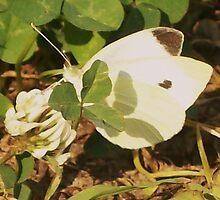 White  by Terra 'Sunshine' Gilbert