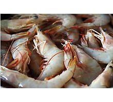 Raw Prawns Photographic Print