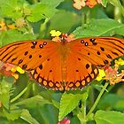 Monarch Butterfly on Lantana Flowers by naturesfancy