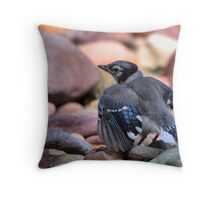 Hungry Jay Throw Pillow