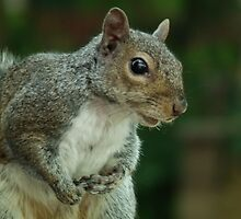 Squirrel 3 by Peter Barrett