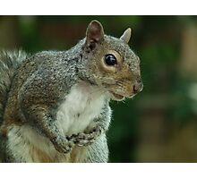 Squirrel 3 Photographic Print