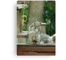 Squirrel 4 - please sir can I have some more? Canvas Print