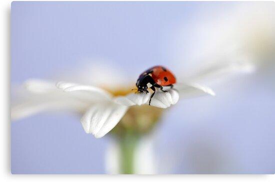Ladybird by Ellen van Deelen