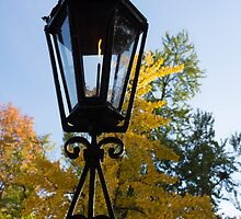 The Lantern and the Ginkgo - Retro Autumn Mood by Georgia Mizuleva