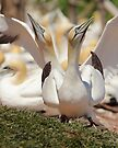 Photo Bomb Avian Style by Todd Weeks