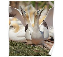 Photo Bomb Avian Style Poster