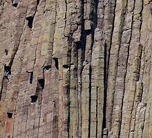 Climbers on Devils Tower by Alex Preiss