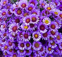 Purple wall Flowers by Lyndy