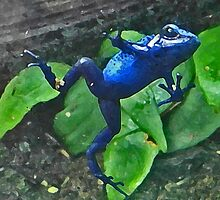 Funny Blue Tree Frog Leaping by naturesfancy