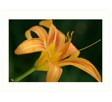 Lighter lily in Wakarusa Art Print