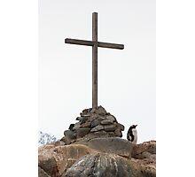 Gentoo Penguin Honour Guard Photographic Print