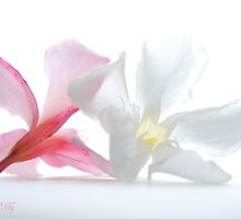 Oleander 2 by aMOONy