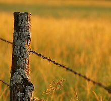 I must love fenceposts by agenttomcat