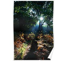 Morning Sun in the Woods Poster