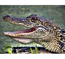 Gator Photographic Print