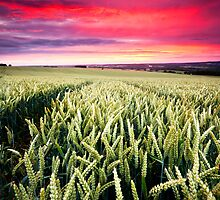 South Downs Sunset II by Matt Harris