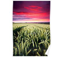 South Downs Sunset II Poster