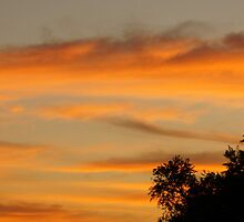 Sunset sky and trees in silhouette by agenttomcat