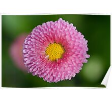 Pink & Yellow Flower Poster