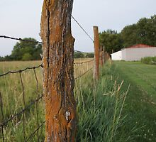 A fence receding in my backyard by agenttomcat