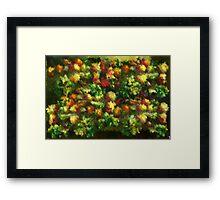 Fruits and vegetables Framed Print
