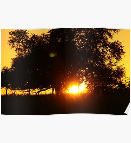 Sunlight tunneling through a tree Poster