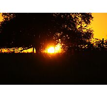 Sunlight tunneling through a tree Photographic Print