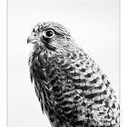 Kestrel Chick by R-S-Peck