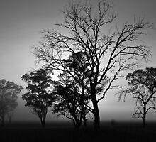 Sunrise and a tree, monochrome by Odille Esmonde-Morgan