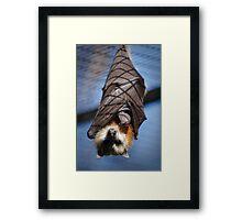 Reptile Park 1 Framed Print