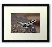 Reptile Park 3 Framed Print