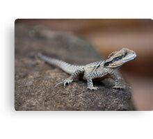 Reptile Park 3 Canvas Print