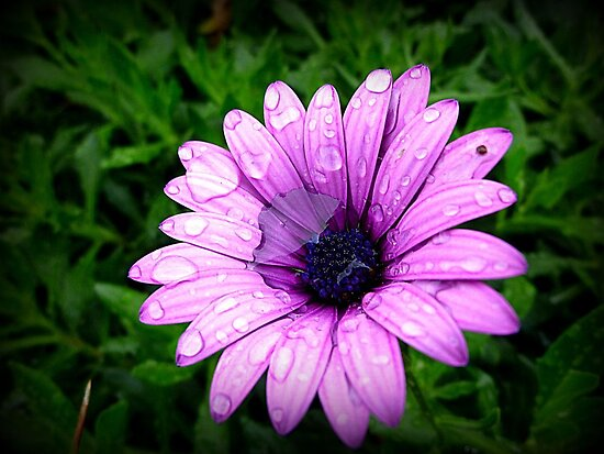 Wet & Miserable Daisy by EdsMum
