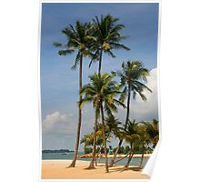 A palm lined beach in the tropics Poster