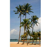 A palm lined beach in the tropics Photographic Print