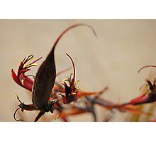 Unique Botanics I Photographic Print