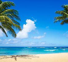 Coconut Palm tree on the beach in Hawaii, Kauai by ellensmile