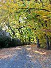 ~ Autumn in Oakbank ~ by LeeoPhotography