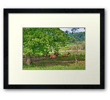 Elk Herd Framed Print